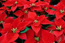 Concerto per piante e percussioni sabato 21 dicembre ore 18.00 Un concerto di Natale alternativo e particolarmente [...]